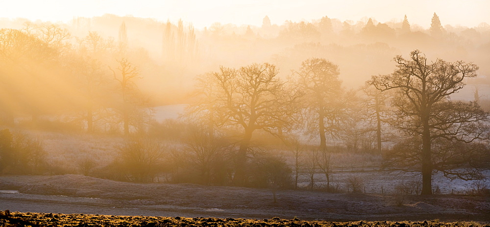 Winter trees in misty panorama, Surrey, England, United Kingdom, Europe - 367-6126