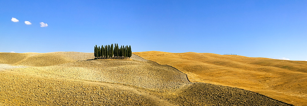 Panorama of group of Cypress trees in the landscape, Val d'Orcia, UNESCO World Heritage Site, Tuscany, Italy, Europe - 526-3823