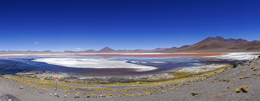 Play of colours of the Laguna Colorada, Reserva Nacional de Fauna Andina Eduardo Abaroa, Altiplano, Sur Lipez, Bolivia, South America
