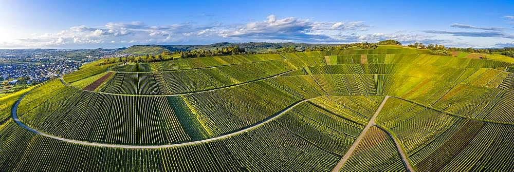 Drone shot, vineyards at Nonnenberg, Remstal near Schnait, Baden-Wuerttemberg, Germany, Europe