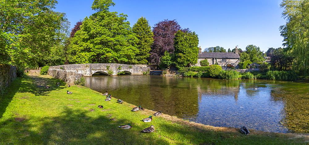 Ducks on the bank of River Wye, Ashford in the Water, Derbyshire Dales, Derbyshire, England, United Kingdom, Europe - 844-23191