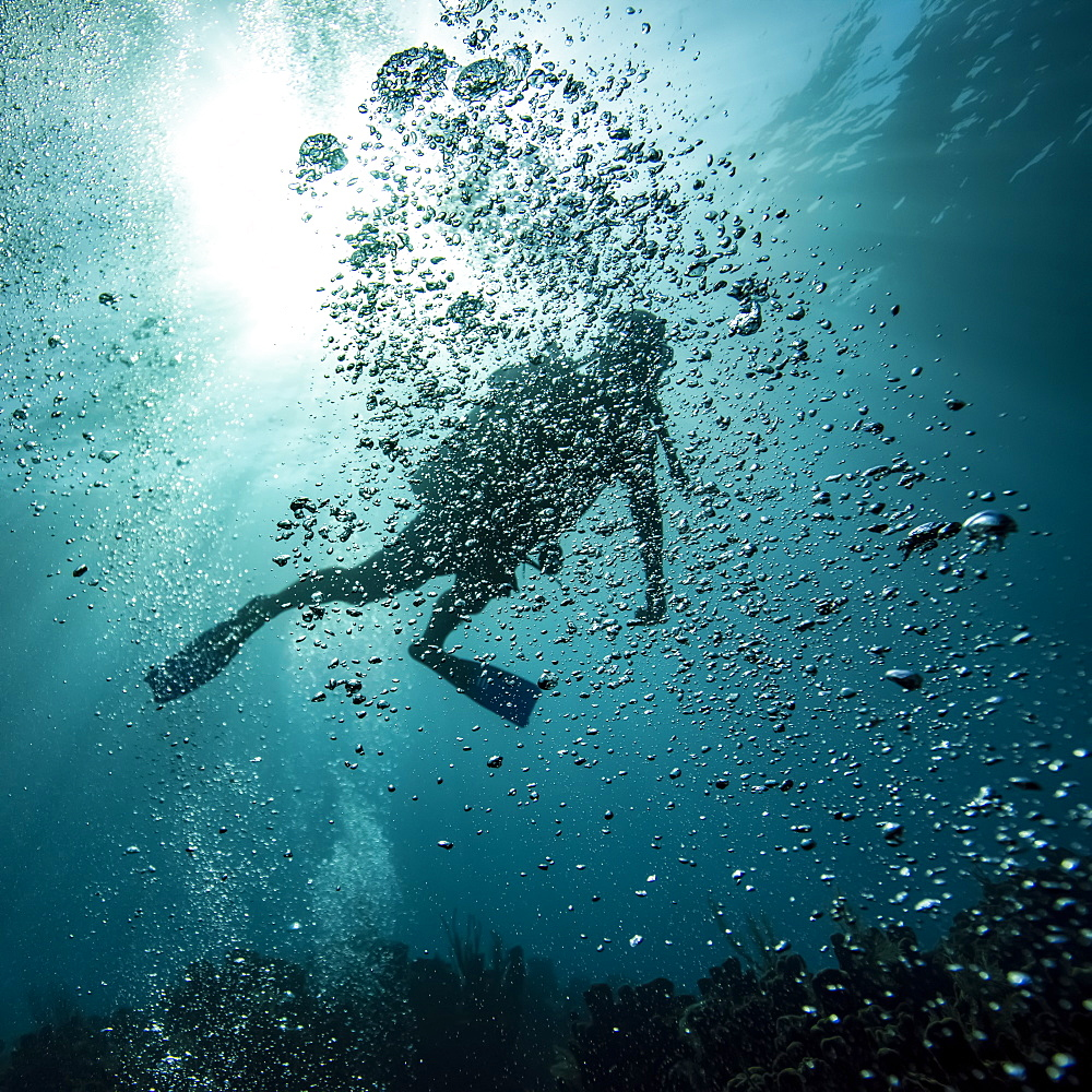 Scuba diver obscured by bubbles underwater at the dive site Blue Channel, Roatan Marine Park, Bay Islands Department, Honduras