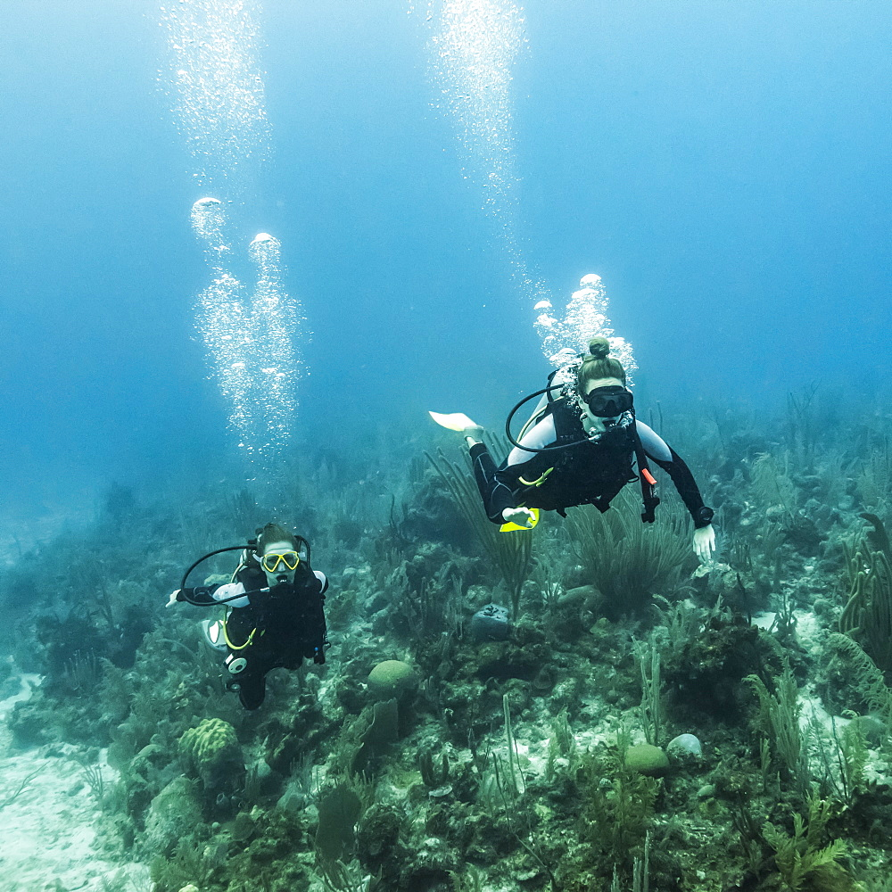 Scuba divers at Joe's Wall Dive Site, Belize Barrier Reef, Belize