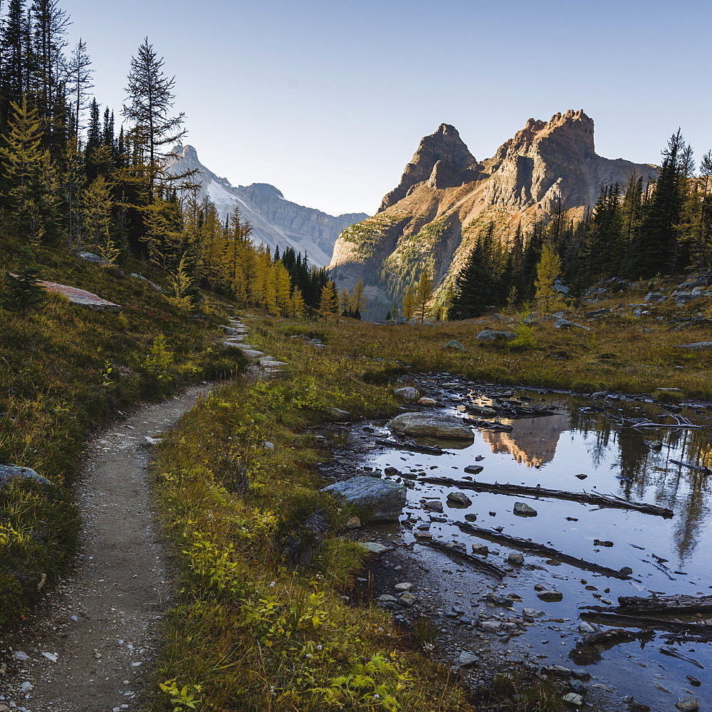 The Alpine Circuit Trail at Lake O'Hara, Yoho National Park, UNESCO World Heritage Site, British Columbia, Canadian Rockies, Canada, North America - 1275-56
