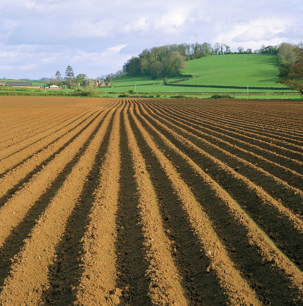Ridged soil in ploughed field, Somerset, England, United Kingdom, Europe