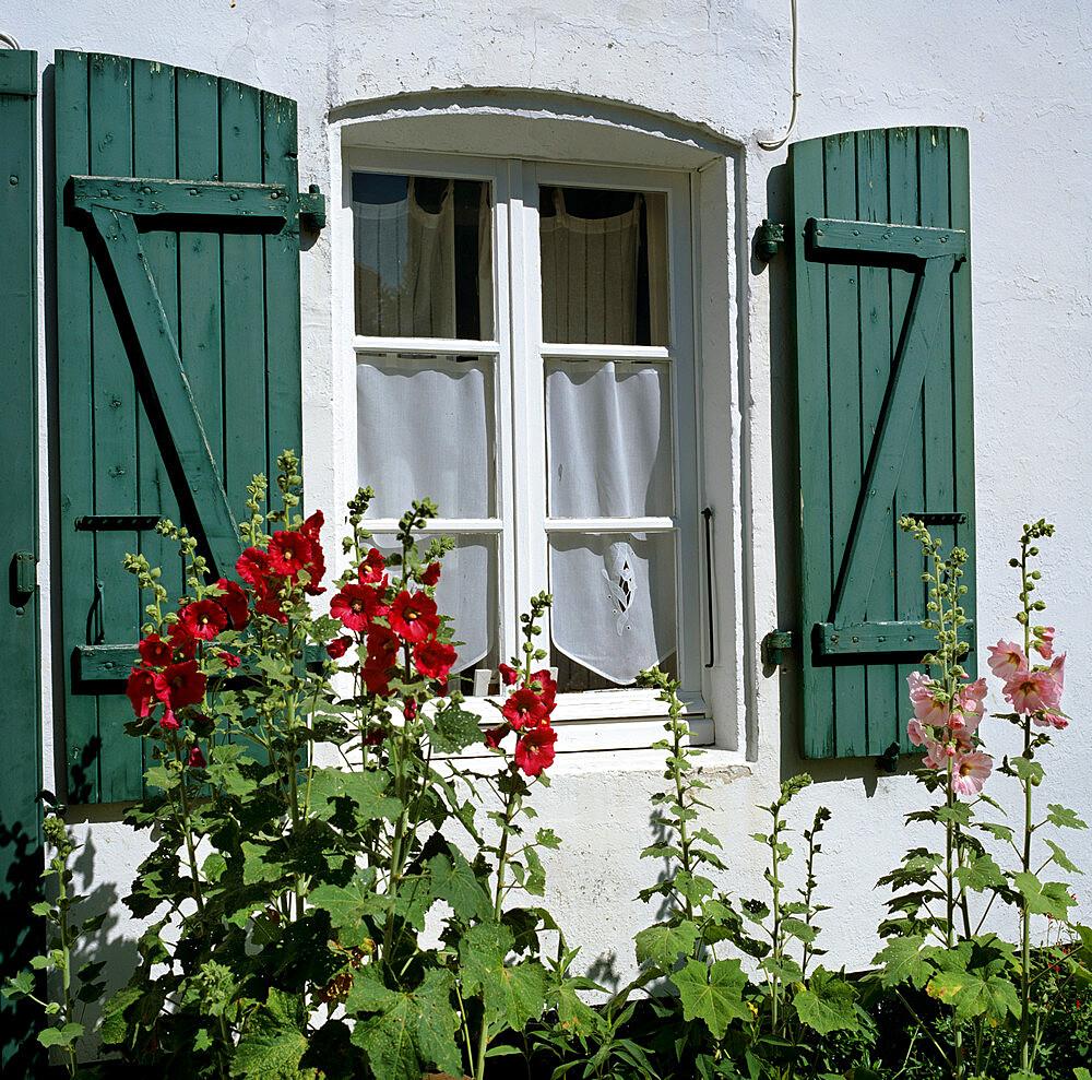 Typical scene of shuttered windows and hollyhocks, St. Martin, Ile de Re, Poitou-Charentes, France, Europe - 846-1299