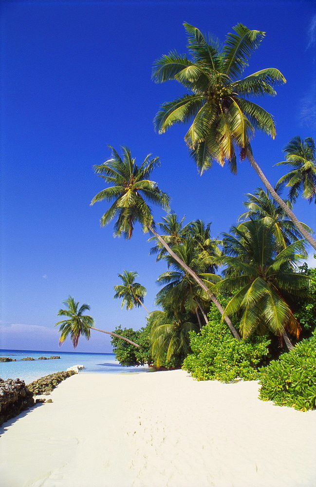 Beach at Nakatchafushi, North Male Atoll, Maldives - 1-35905