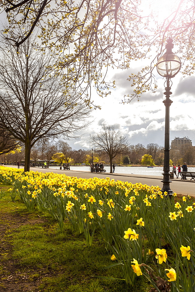 Visitors walking along the Serpentine with daffodils in the foreground, Hyde Park, London, England, United Kingdom, Europe   - 10-356