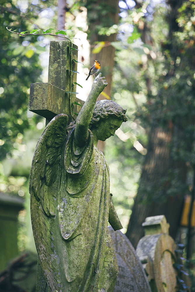 Statue of woman with red robin perched on an outstretched finger, Highgate Cemetery, London, England, United Kingdom, Europe - 10-442