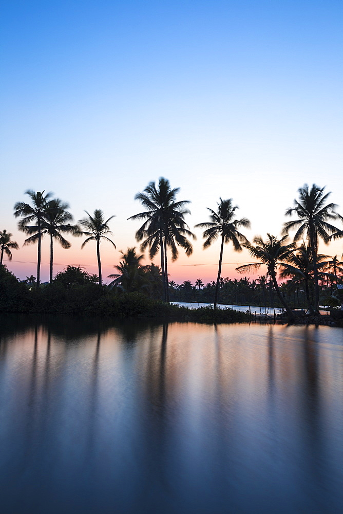 Palm trees reflecting in backwaters, Munroe Island, Kollam, Kerala, India, Asia