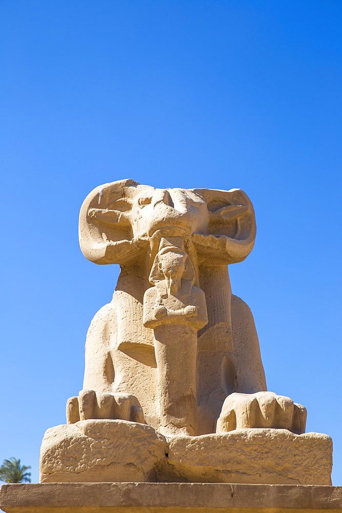Egypt, Luxor, Luxor Temple, Avenue of Spinxes - 1104-828