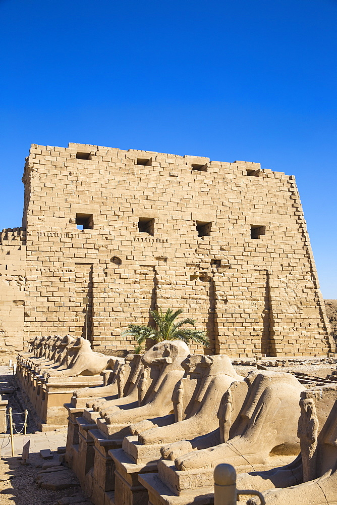 Egypt, Luxor, Luxor Temple, Avenue of Spinxes - 1104-835
