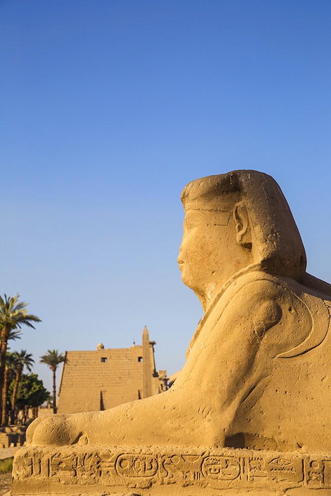 Egypt, Luxor, Luxor Temple, Avenue of Spinxes - 1104-855