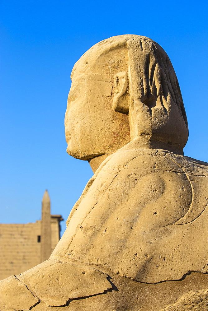 Egypt, Luxor, Luxor Temple, Avenue of Spinxes - 1104-857
