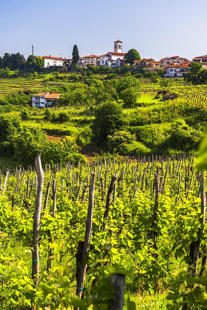 Slovenia countryside and vineyards and the hill top town of Medana, Goriska Brda (Gorizia Hills), Slovenia, Europe