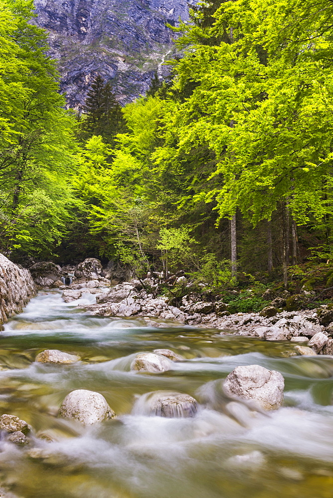 Bohinj River in the Bohinj Basin, Triglav National Park, Julian Alps, Slovenia, Europe