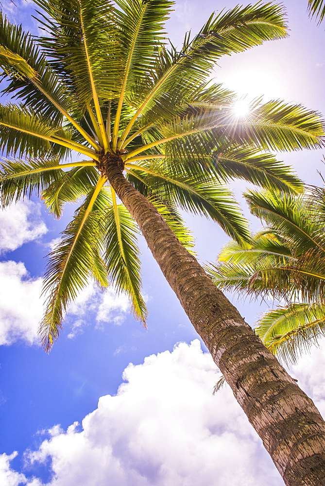 Palm tree in Titikaveka, Rarotonga, Cook Islands, South Pacific Ocean, Pacific