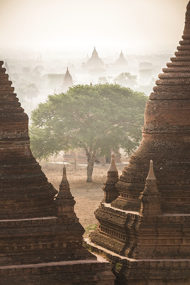 Sunrise at the Temples of Bagan (Pagan), Myanmar (Burma), Asia