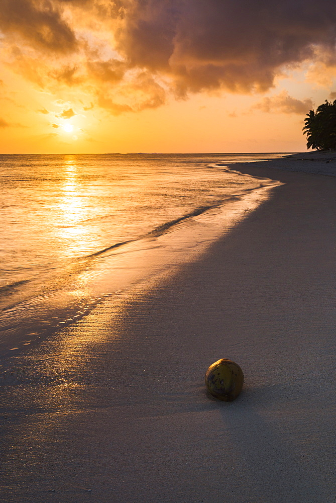 Coconut on a tropical beach at sunset, Rarotonga Island, Cook Islands, South Pacific, Pacific - 1109-2883