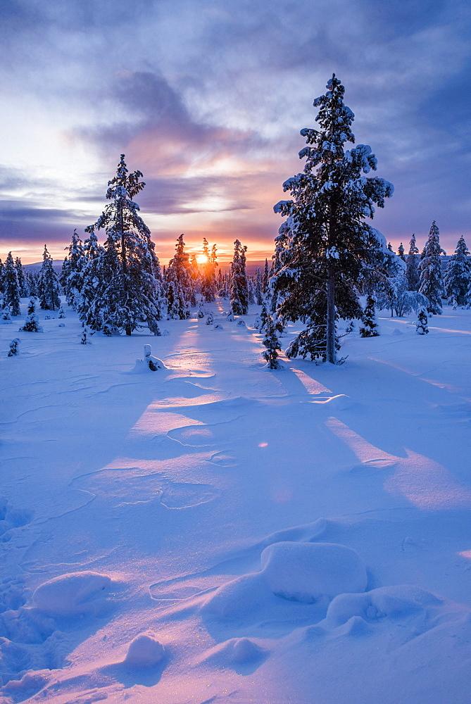 Snow covered winter landscape at sunrise, Lapland, Pallas-Yllastunturi National Park, Lapland, Finland, Europe