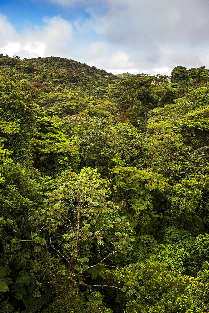 Monteverde Cloud Forest Reserve, seen from Selvatura Treetop hanging bridges, Costa Rica, Central America