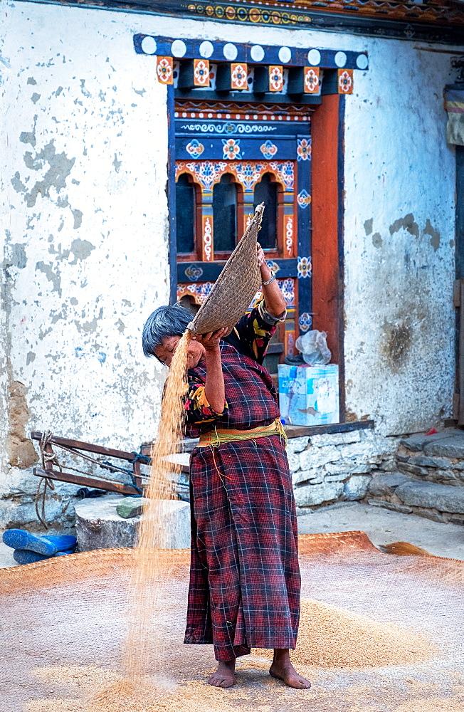 Traditional rice sifting at Tshangkha Village, near Trongsa, Bhutan, Asia - 1111-152
