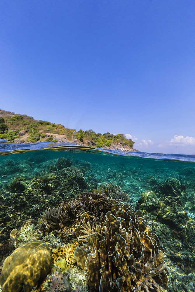 Underwater reef system of the Marine Reserve on Moya Island, Nusa Tenggara province, Indonesia, Southeast Asia, Asia