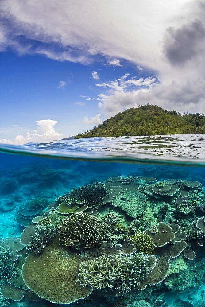 Half above and half below view of coral reef at Pulau Setaih Island, Natuna Archipelago, Indonesia, Southeast Asia, Asia