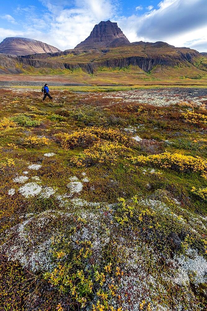 Hiker in open tundra and columnar basalt in Brededal, Disko Island, Qeqertarsuaq, Baffin Bay, Greenland, Polar Regions - 1112-5845