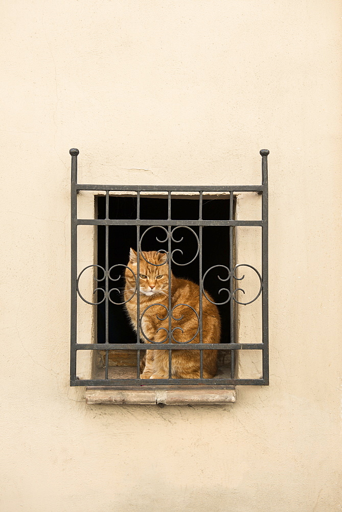 Cat sat at a window in Pienza, Val d`Orcia, province of Siena, Tuscany, Italy, UNESCO World Heritage - 1113-104530