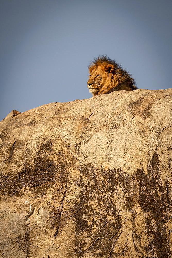 Head of male lion (Panthera leo) lying on kopje, Serengeti National Park, Tanzania