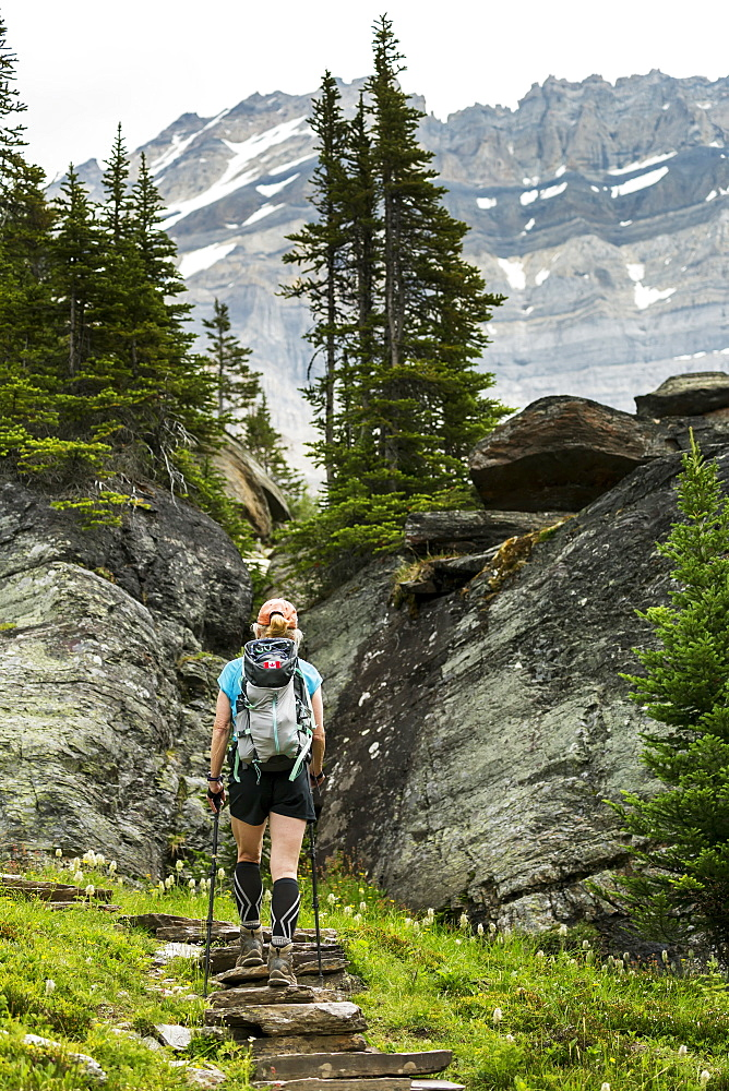 Female hiker assending rock stairs in a mountain meadow with rocky cliffs and mountain in the background, British Columbia, Canada