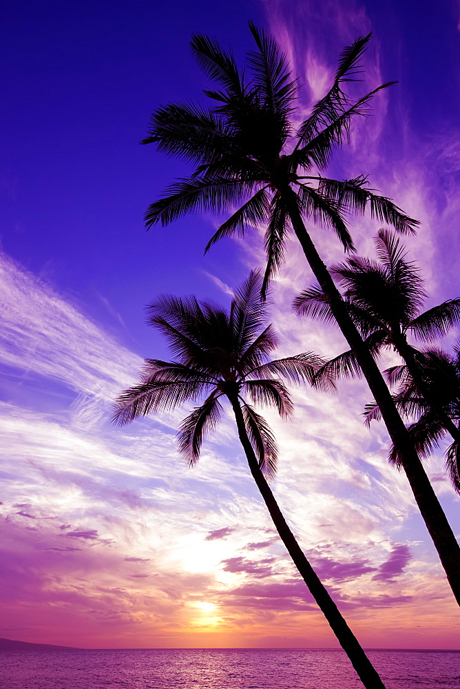 Palm trees at sunset, Wailea, Maui, Hawaii, United States of America