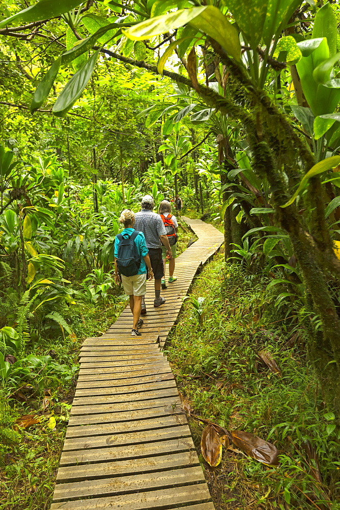Tourists on boardwalk to Waimoku Falls, Kipahulu, Maui, Hawaii, United States of America