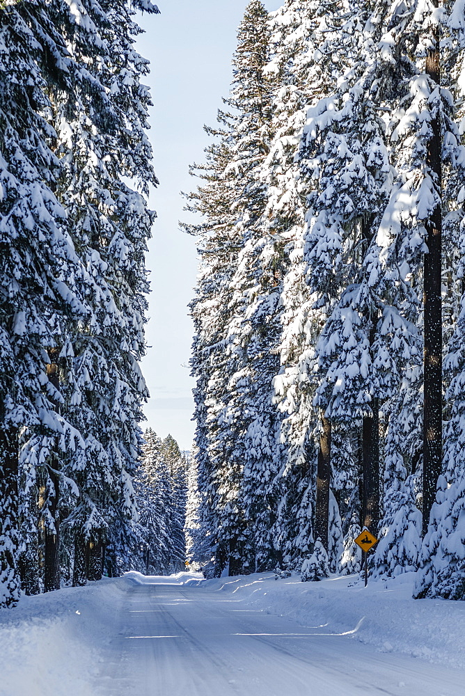 Snow covered road and trees, Ashland, Oregon, United States of America - 1116-48540