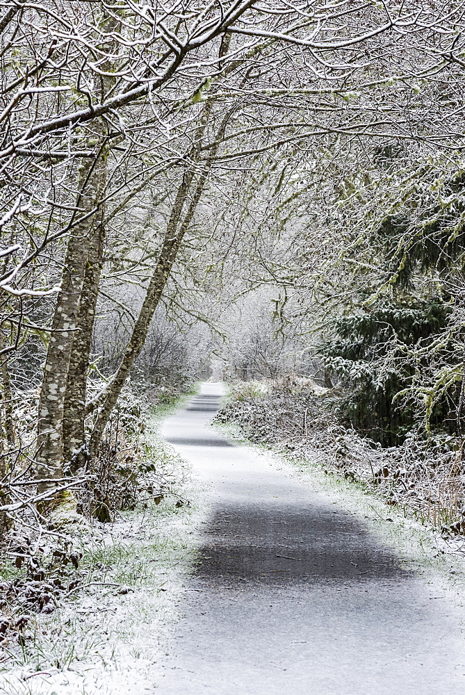Snow falls on Netul River Trail, Astoria, Oregon, United States of America