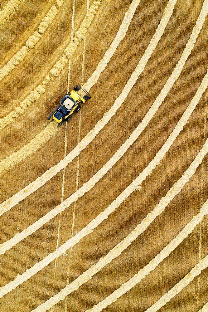 Aerial view directly above a combine collecting lines of grain, Beiseker, Alberta, Canada