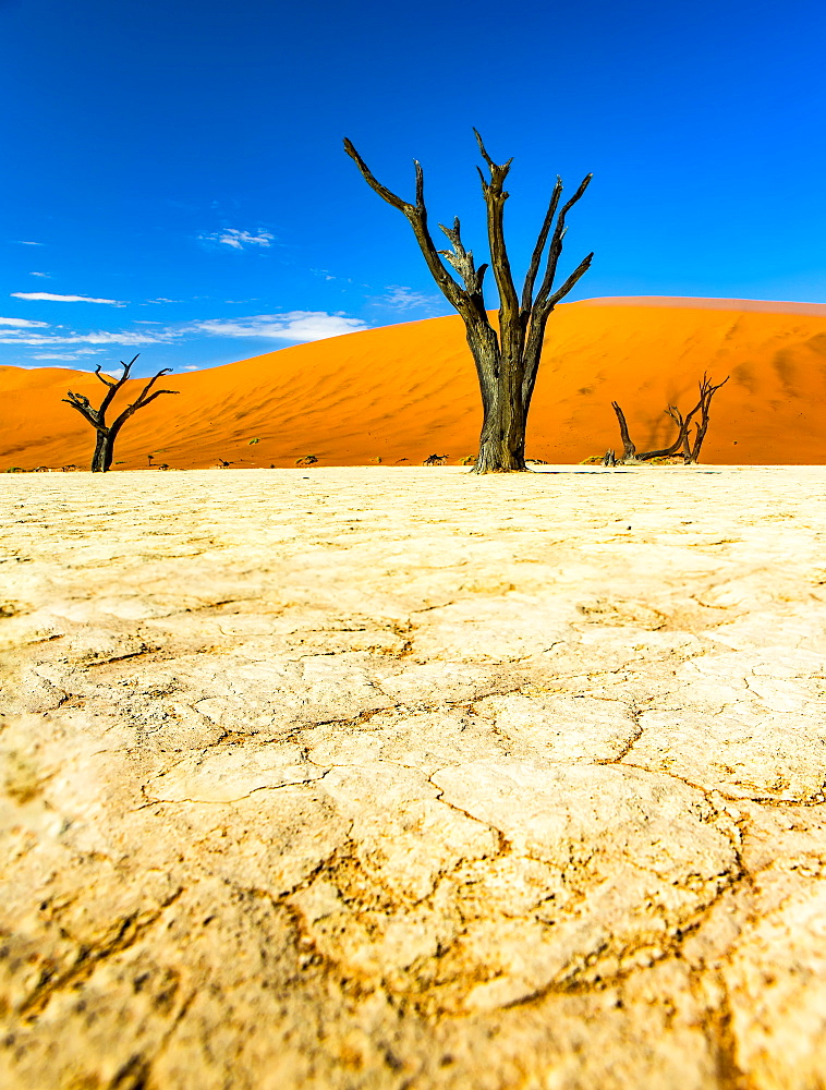 The salt pan of Deadvlei, Sossusvlei, Hardap Region, Namibia