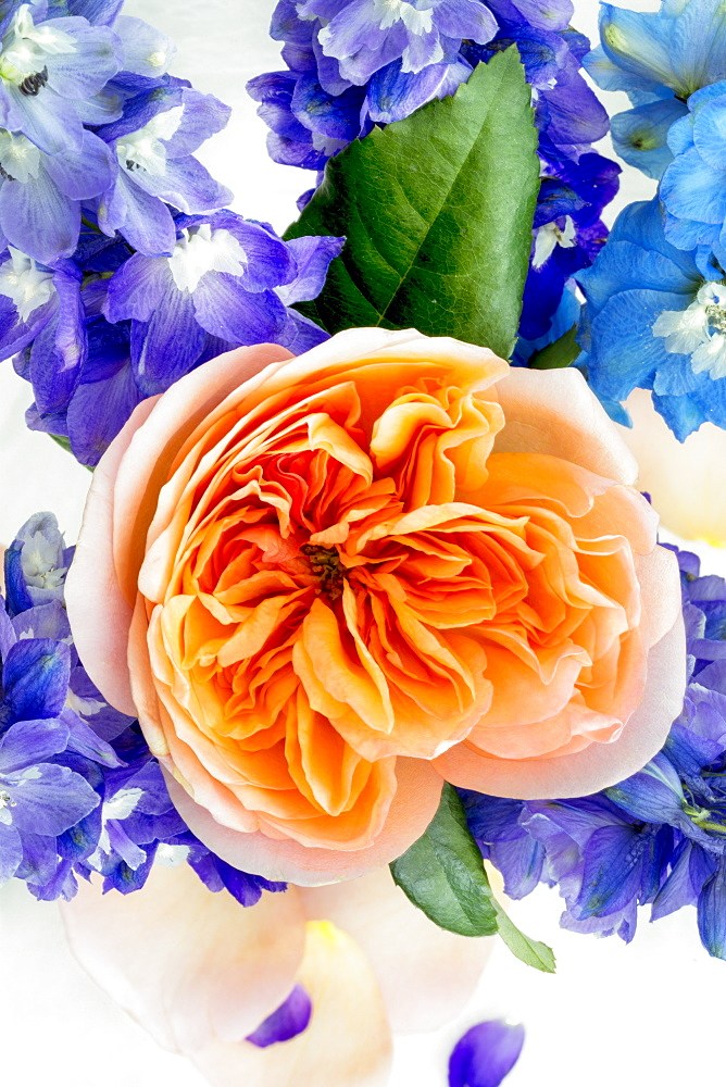 An orange flower blossoming among blue and purple flowers in an arrangement