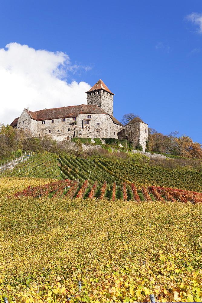 Burg Lichtenberg Castle, Vineyards in autumn, Oberstenfeld, Ludwigsburg District, Baden Wurttemberg, Germany, Europe