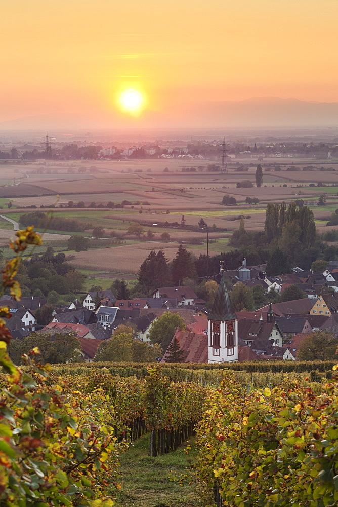 Vineyards at sunset, Ehrenstetten, Staufen im Breisgau, Markgrafler Land, Black Forest, Baden Wurttemberg, Germany, Europe