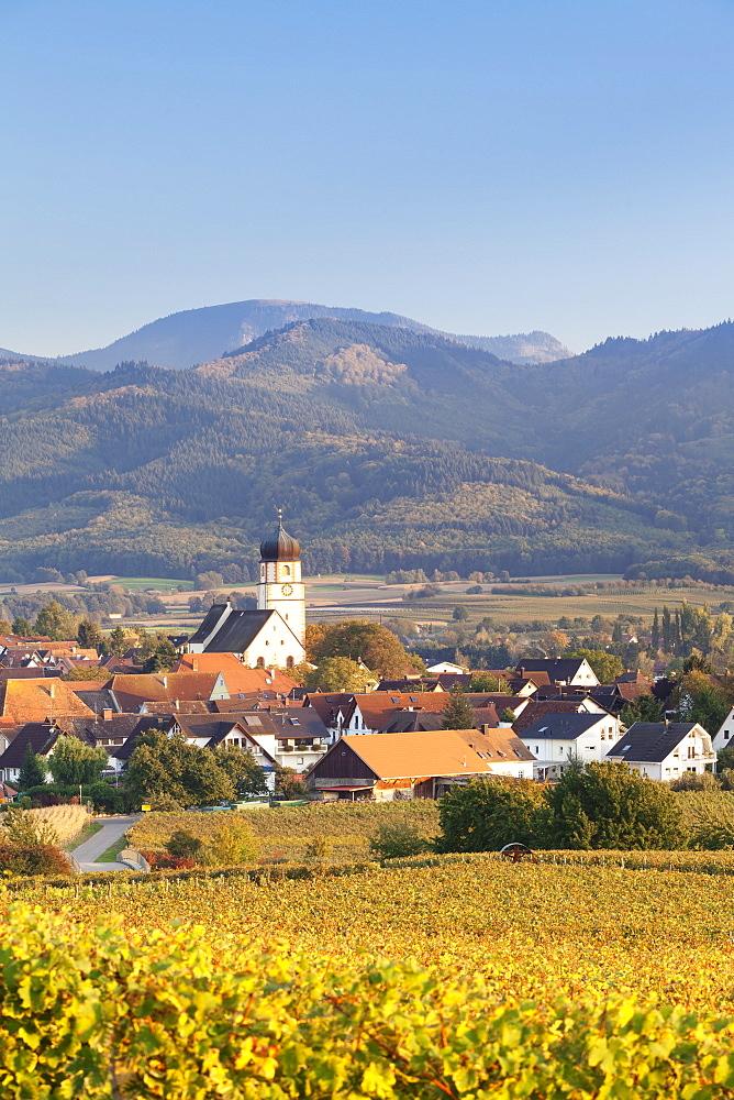 Vineyards in autumn, Ehrenkirchen, District Ehrenstetten, Markgrafler Land, Black Forest, Baden Wurttemberg, Germany, Europe