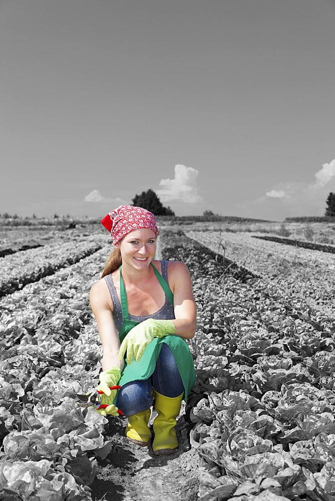 Female farmer picking lettuce (Lactuca sativa), Esslingen, Baden Wurttemberg, Germany - 1160-2118B