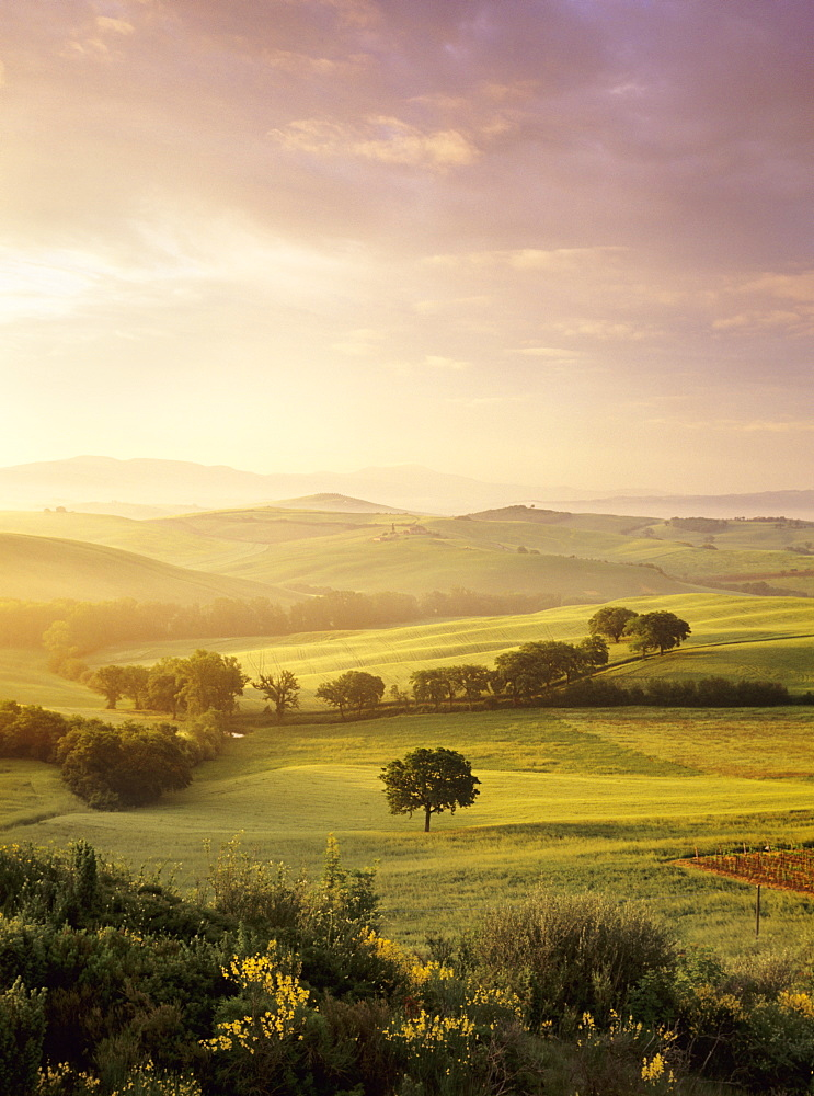 Sunrise at Val d'Orcia, near San Quirico, Val d'Orcia (Orcia Valley), UNESCO World Heritage Site, Siena Province, Tuscany, Italy, Europe