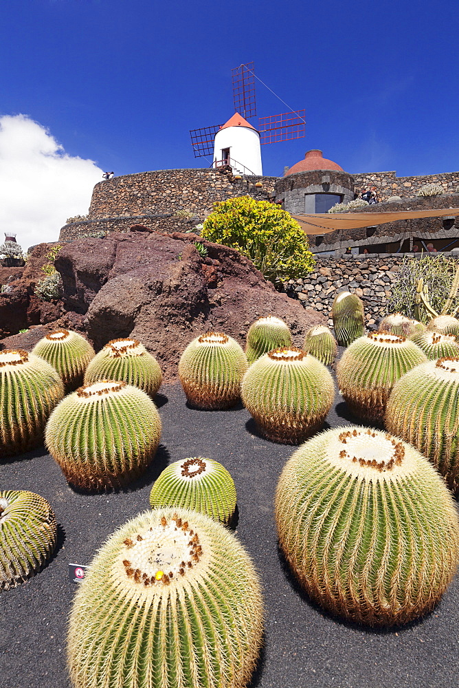 Cactus garden Jardin de Cactus by Cesar Manrique, wind mill, UNESCO Biosphere Reserve, Guatiza, Lanzarote, Canary Islands, Spain, Atlantic, Europe - 1160-2959