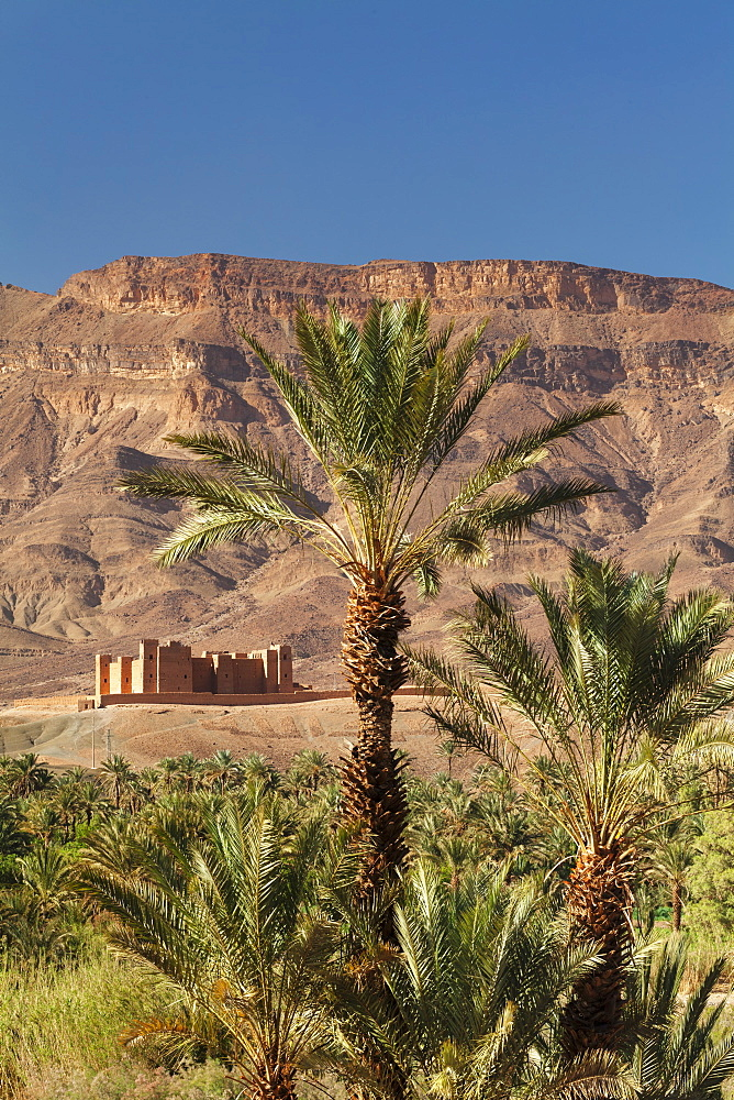 Tamnougalt Kasbah, Draa Valley, Atlas Mountains, Morocco, North Africa, Africa
