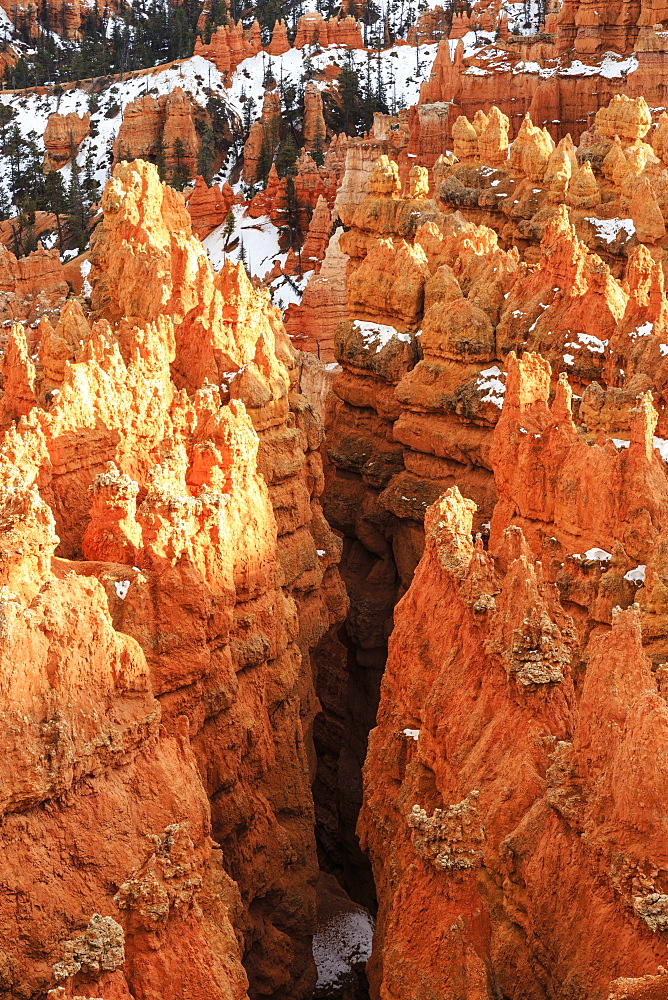 Hoodoos with snow lit by late afternoon sun, from Rim Trail near Sunset Point, Bryce Canyon National Park, Utah, United States of America, North America