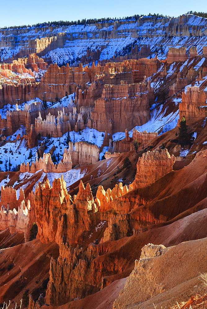 Hoodoos and snowy rim cliffs lit by strong late afternoon sun in winter, near Sunrise Point, Bryce Canyon National Park, Utah, United States of America, North America