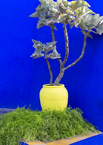 Detail of potted plant against blue wall, Jardin Majorelle, owned by Yves St. Laurent, Marrakech, Morocco, North Africa, Africa