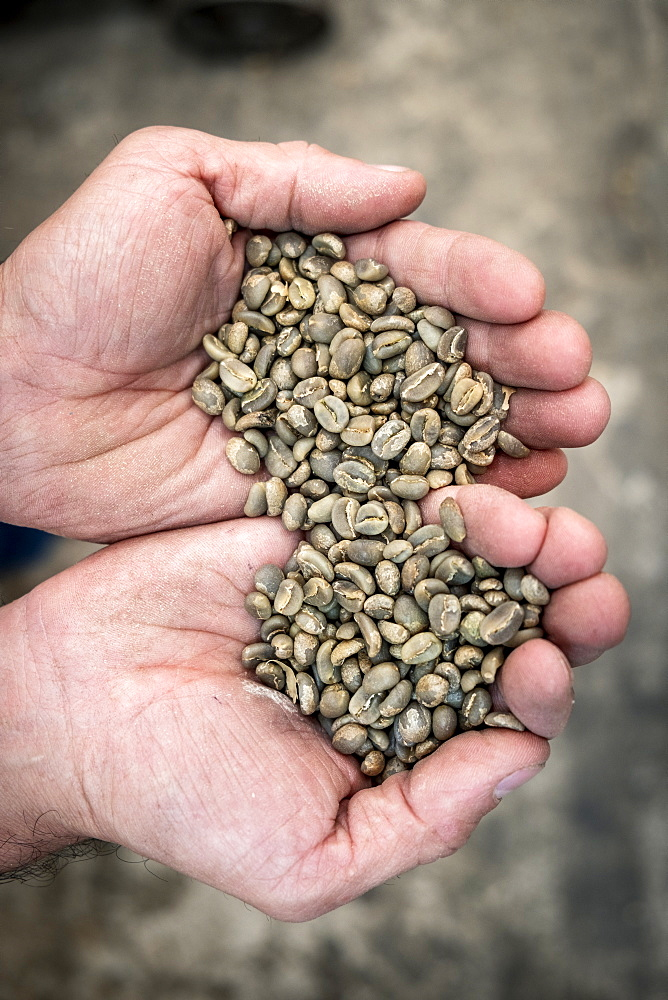 Raw coffee beans, Colombia, South America